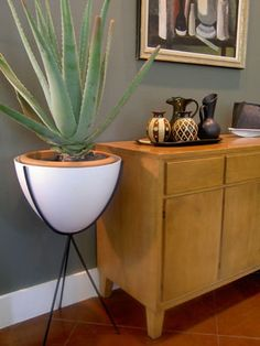 tall white with giant aloe. Bringing the outdoors in.