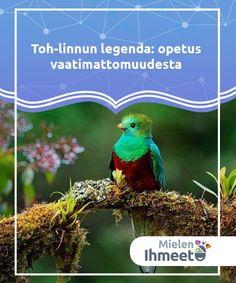 Toh-linnun legenda: opetus vaatimattomuudesta   Toh-linnun legenda on muinaisten maya-intiaanien tarina Jukatanin niemimaalta Meksikosta. Toh-linnulle kävi huonosti sen ylpeydestä johtuen.