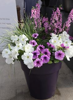 fan of petunias? Some new varieties might win you over Benary petunia container. Container Flowers, Flower Planters, Fall Planters, Full Sun Container Plants, Petunia Tattoo, Gemüseanbau In Kübeln, Easy Plants To Grow, Container Gardening Vegetables, Succulent Containers