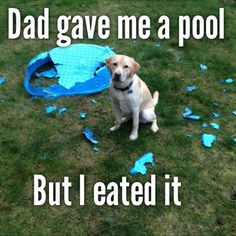 Dog Swimming For some reason, his brand new pool offended him.View Post