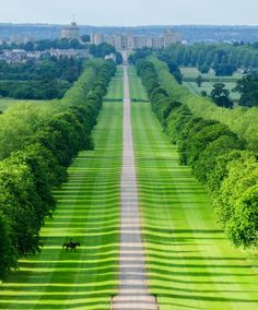The Long Walk at Windsor Castle - Berkshire, England