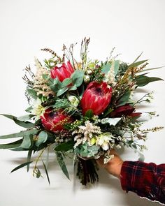 Native weddings are just out fave 🎉 This was our creation for the lovely Lisa, who wanted a medium to small sized unstructured native bouquet using these darling red Protea 💘 Red Bouquet Wedding, Red Wedding, Wedding Bells, Wedding Flowers, Bridal Bouquets, Protea Bouquet, Small Bouquet, Fresh Flowers