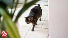 Hootsuite bristol pest control pinterest cat fleas get rid of pet fleas find the answers with your local bristol ccuart Gallery