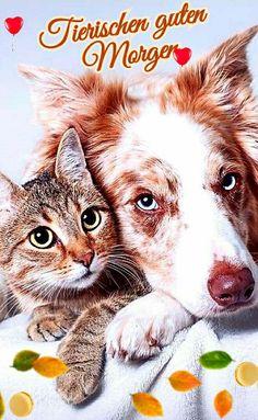 Good Morning, Corgi, Cats, Sissi, Animals, Super, Friendship, Bom Dia, Thank You Images Funny