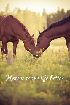 Horses make life better!                                                                                                                                                      More