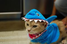 Cats getting in the spirit for Shark Week. I'm surprised the cats actually keep the shark costumes on.