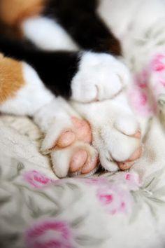 tootsies, love those kitty toes