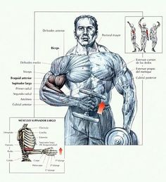 Best workout routine for big biceps - the 7 of my favorite workouts gaining huge biceps. Simple and effective workout routine for best results
