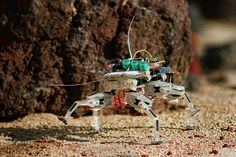 NASA Develops Spider-Like Robot