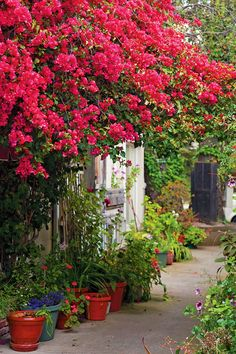 ~a gorgeous Carmel cottage courtyard~