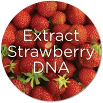 Homeschool biology experiment using strawberries to teach about DNA in a tangible visible way! TOO COOL!
