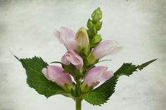 Still Life, Van, Plants, Photography, Fotografie, Photograph, Vans, Photo Shoot, Planters