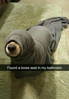 If you like funny dog memes, you've come to the right internet location. These are the 100 funniest dog memes of all time. Baby Animals Super Cute, Cute Baby Dogs, Cute Funny Dogs, Cute Little Animals, Cute Funny Animals, Funny Dog Pics, Funny Puppies, Funny Happy, Smart Animals