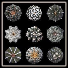 Astrophytum asterias (by IannisMS)