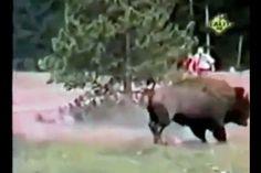 When Animals ATTACK - http://trynotlaughs.us/when-animals-attack/
