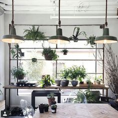 Urban Outfitters - Blog - Thursday Tip-Off: Houseplant Round-Up