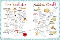paddenstoelen zoekkaart Fauna, Science For Kids, Teaching Kids, Stuffed Mushrooms, Place Card Holders, School, Projects, Blog, Cards