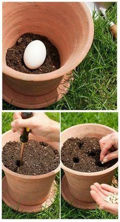 Pourquoi faut-il planter un œuf cru dans vos pots de fleurs. Pour enrichir la terre et obtenir des plantes en bonne santé, découvrez cette astuce de jardinage étonnante !Remplissez le fond de votre pot de fleur avec de la terre de rempotage (5 cm environ).Placez-y un œuf cru, puis finissez de remplir le pot avec de la terre. En se décomposant, l'œuf constituera un engrais naturel riche et nutritif pour toutes vos plantes surtout les légumes du potagers.
