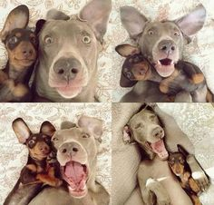 Best. Selfies. Ever.