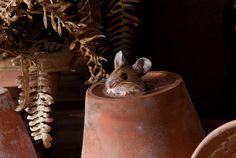 Woodmouse In The Old Shed by Dale Sutton