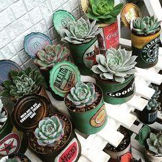 リメイク缶には多肉植物を植えて。ずらっと並べると存在感がUPしますね!