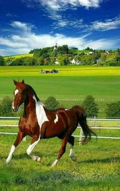 Pinto horse with beautiful country backdrop Most Beautiful Horses, All The Pretty Horses, Beautiful Creatures, Animals Beautiful, Cute Animals, Animals Amazing, Cute Horses, Horse Love, Horse Photos