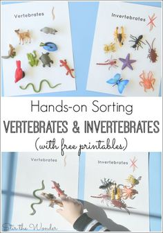 Hands-on Sorting Vertebrates and Invertebrates Kids will have fun sorting animals by vertebrates or invertebrates with this free printable! Science Week, Science Activities For Kids, Sorting Activities, Animal Activities, Easy Science, Preschool Science, Teaching Science, Science Projects, Preschool Activities