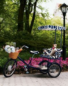 Adult Tricycle - Wow! Tucker and Duke could ride in style with this one. LOL
