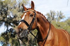 The Horse Market: the Seller Views and Tips by Guest Blogger Jeanine Biemond   Velvet Rider