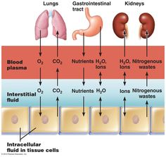 3 fluid compartments of the body Exchange of gases, nutrients, water, and wastes between the three fluid compartments of the body.