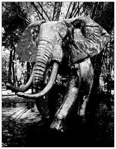 ELE, El Elefante. Parque Los Caobos. Caracas. Venezuela