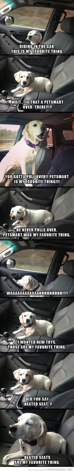 this is my dog 100% every time we drive the pet store he practically jumps out the window and then pouts when i dont stop in there. i dont have heated seats though lol @Katherine Adams Rodriguez Lal