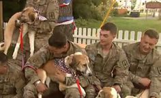 Heartwarming Soldier and Dog Reunion Videos for Veterans Day