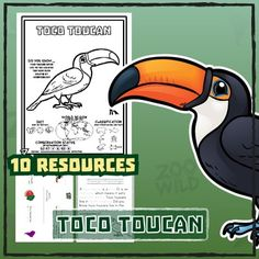 Toco Toucan -- 10 Resources -- Coloring Book, Reading & Activities