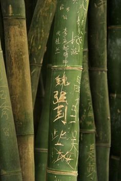 Bamboo with writing