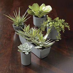 Mini Potted Succulent in Sale Accessories | Crate and Barrel