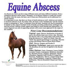 Young Living Essential Oils: Equine Horse