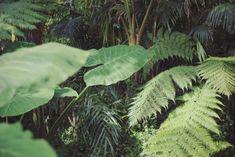 Botanical Garden Frankfurt/M. Hawaii Surf, Plants Are Friends, Surfer Style, Landscape Illustration, Illustration Art, Botany, Botanical Gardens, Flower Power, Planting Flowers