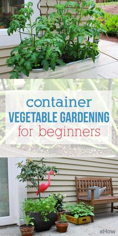 Patios, front porches and balconies can be ideal gardening locations when you use container gardening methods! Grow your own vegetables with just a littel space, a few pots some platns and little bit of sunshine! How-to here: www.ehow.com/...