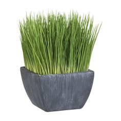 potted grass $10.95