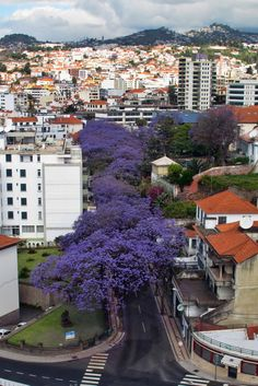 84 Best Madeira Island Portugal Images Funchal Island Islands