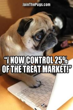 Pugs Takeover Wall Street » Join The Pugs