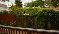 Custom metal trellises Temple Texas Central Texas Gardener