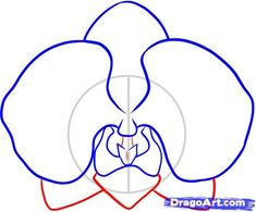 how to draw an orchid step 5