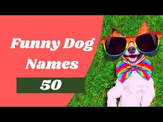 50 Top Funny Dog Names for Your New Pup ! Puppy Names 2021 - YouTube Boy Puppy Names, Funny Dog Names, Cute Names For Dogs, Best Dog Names, Cool Names, Funny Dogs, Cute Dogs, Unique Female Dog Names, Girl Dog Names Unique