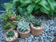 Use 1 colher de café rasinha de NPK 10-10-10 a cada mês nos vasinhos e elas se manterão bonitas. Use só a farinha de osso (1 colher de chá/vaso) uns 2 meses antes da floração, que ocorre na primavera