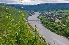 Vallée de la Moselle © Chris-L juin 2011  La Moselle à Urzig.  Allemagne