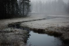 nature, forest, and fog Bild