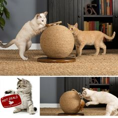Best Cat Toys And EBOOK HOW TO TRAIN YOUR CAT BY RIO CENTER,Cat Scratcher