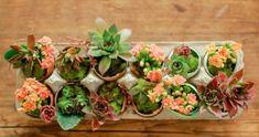 DIY Eggshell Planters | giardino di piante grasse in gusci d'uovo Tutorial